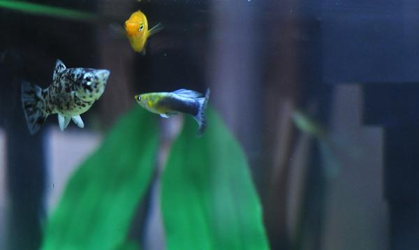 3fish
