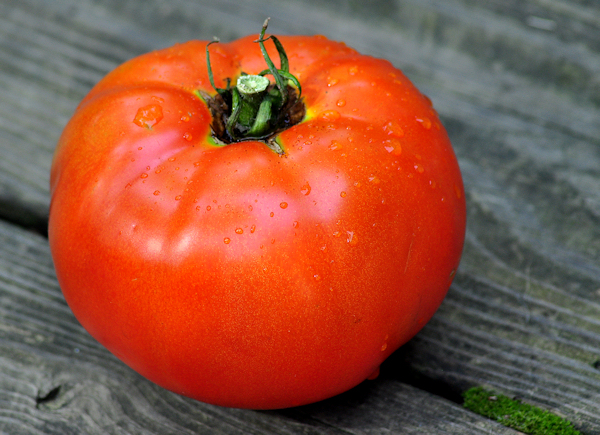 ripe better boy tomato