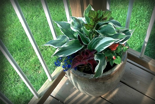 porch container with hosta