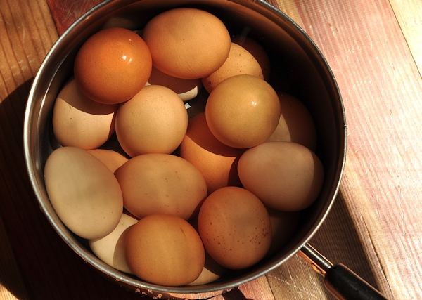 pan of eggs for boiling